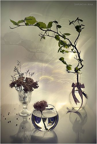 Фотография фотографа Шипунова Ирина - Весенняя фантазия 2