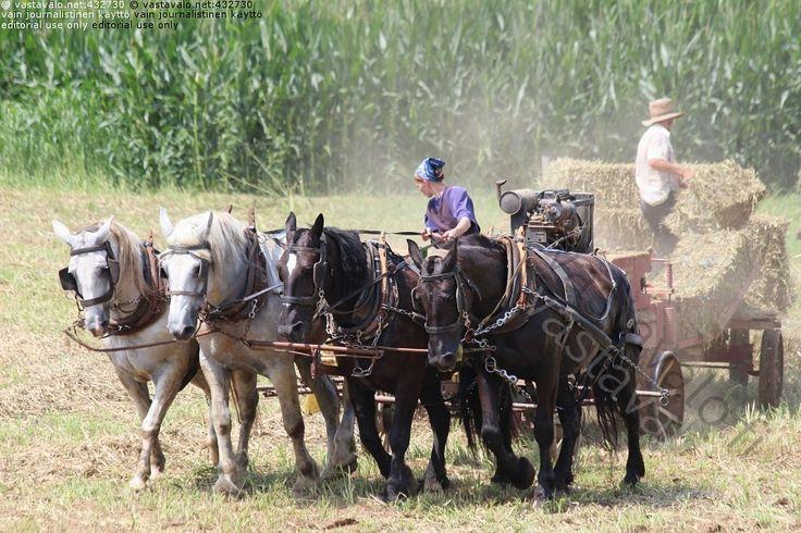 Heinätöitä Amish-farmilla - pelto heinäpelto heinätyö paalaus hevonen hevoset valjakko tiimi heinäpaalit amissi amishi farmi maatila nainen ajaa hevosvetoinen koira kärryt perinne perinteellinen vanhanaikainen uskonto