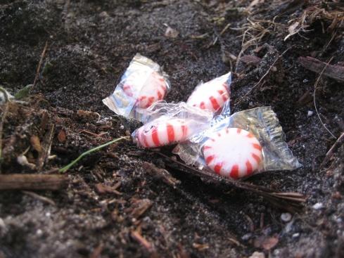 Magic Mint Seeds! Cute Idea