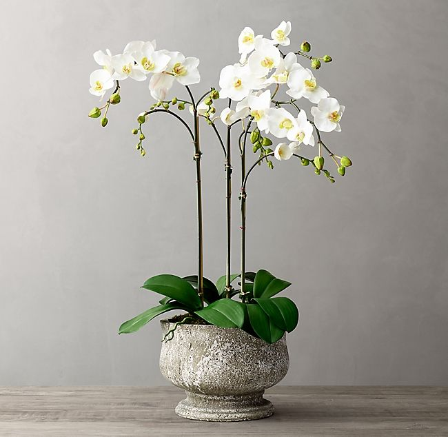 Faux Orchid Plant Weathered Stone Tulip Pedestal Bowl Small Kitchen Or Living Room Side Table Maybe Dining Table If Not Orchid Plants Orchids Orchid Bowl
