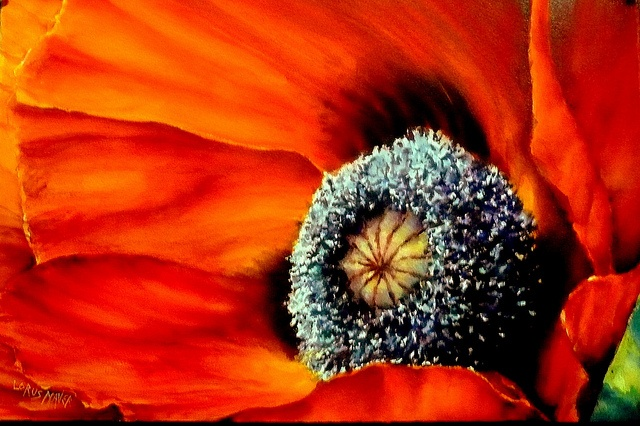 """Blaze !  Watercolour done on Saunders Waterford 200LB rough with M Graham Watercolours .15"""" X 22"""" I decided to Fill the sheet with this poppy focusing on luminosity,light & textures,I probably in future concentrate on using both hot pressed & wood pulp papers for these kind of floral works as you can achieve even more movement with them and continually manipulate the painting which you cannot do as much with the cotton papers.(Best viewed Large): Art Stuff, Art Watercolor, Art Paintings, Art Inspiration, Graham Watercolour 22, 200Lb Rough, Watercolour 15, Poppies Art, Poppies Paintings"""
