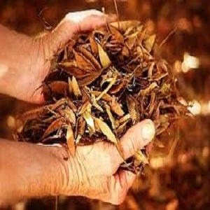 How to Dispose of Autumn Leaves #stepbystep