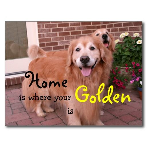 Golden Retriever Quotes Quotes
