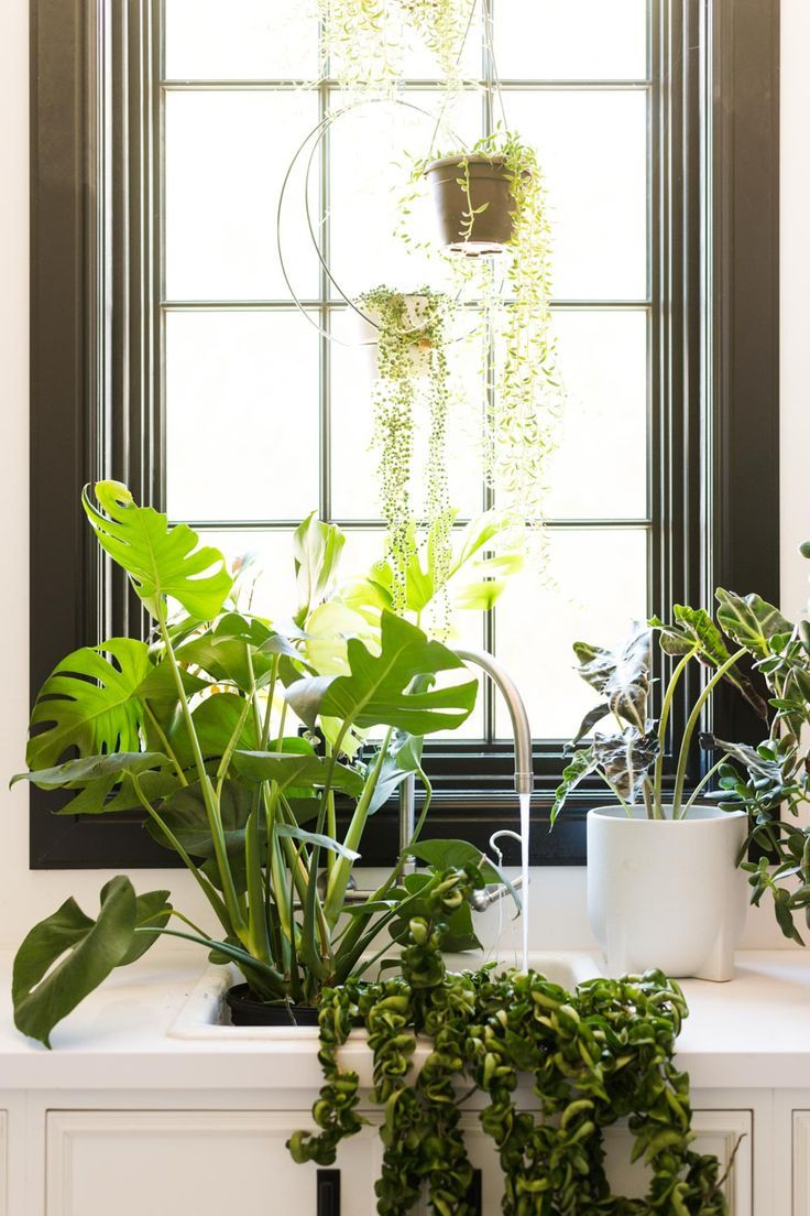 Bottom Watering Your Plants (Ever Heard of It!?) Plants