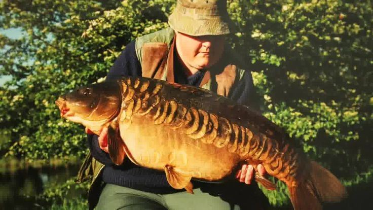 Bored? Come watch some carp fishing videos at http://oncarp.com/carp-videos.php  we have all the latest from the big names.