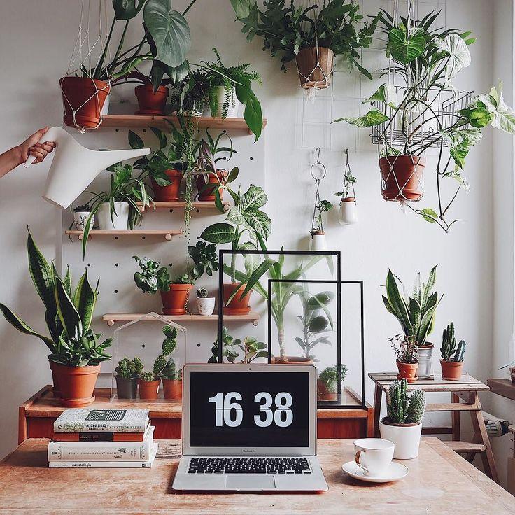 Uwielbiam moje zielone biuro (choc moge sie nim nacieszyc tylko po godzinach). A Wy? Macie u siebie w pracy jakies roslinki?  . . . . . .  #plantlove #plantlady #plantlife #plantpower #plantsofinstagram #plants #plant #plantstagram #plantpowered #botanicalpickmeup #botanical  #jungle #urbanjungle #urbanjunglebloggers #houseplants #houseplantclub #indoorplants #interiorplants  #jungalowstyle #warsawjungle  #greenlife #greenplants  #thisweekoninstagram #workspace #workspacegoals…