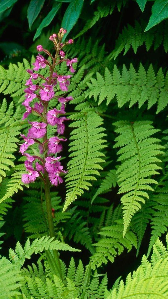 Fern and flower botanical garden pinterest flower for Baby fern plant