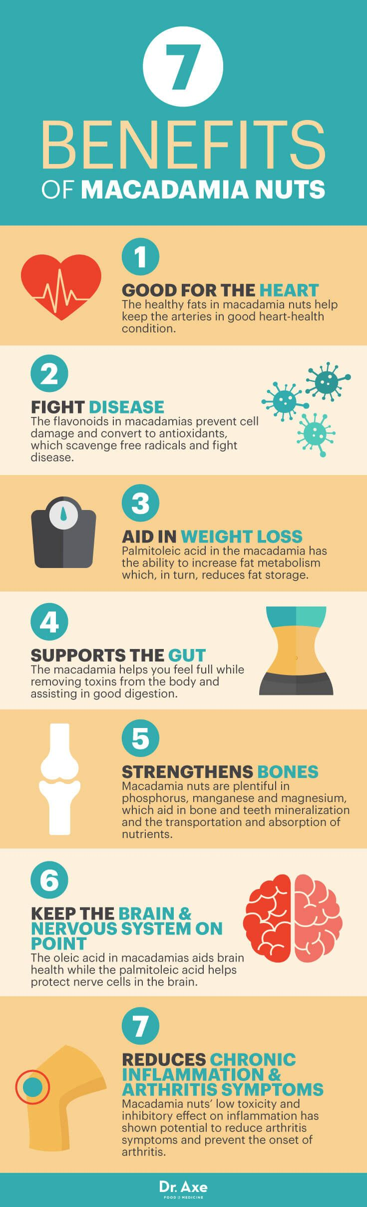 Benefits of macadamia nuts - Dr. Axe http://www.draxe.com #health #holistic #natural