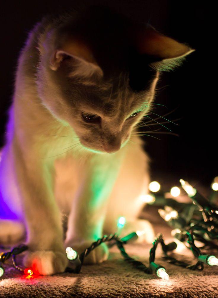 Christmas kitty - 'Ooooo. .* sparkly.*... .'