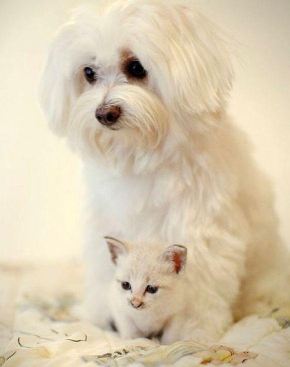 Bianchi bianchi - [Gatti e gattini]
