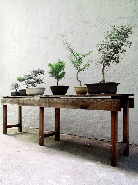 #bonsai #zenBonsai Trees, Benches, Rustic Table, Consoles Tables, Green, Wood Tables, Outdoor Tables, Bonsai Gardens, Plants Tables