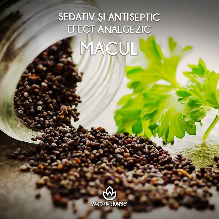 Macul nu este doar o simplă plantă decorativă, ci posedă calități sedative și antiseptice, fiind indicat pentru tratarea stărilor de nervozitate și a insomniilor ușoare. De asemenea, ajută digestia și are efect analgezic. Petalele se folosesc pentru ceai, iar semințele la gătit, dar în cantități mici. #sănătate #nutriție #plante