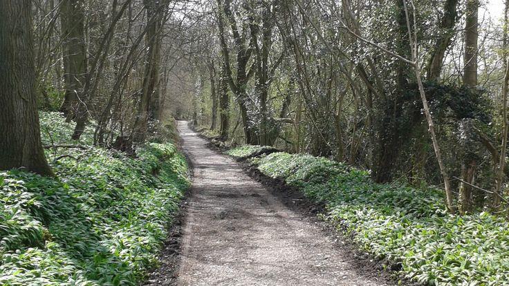 The National Trust's Wenlock Edge, Shropshire, is a narrow limestone escarpment that runs from Craven Arms to Ironbridge.
