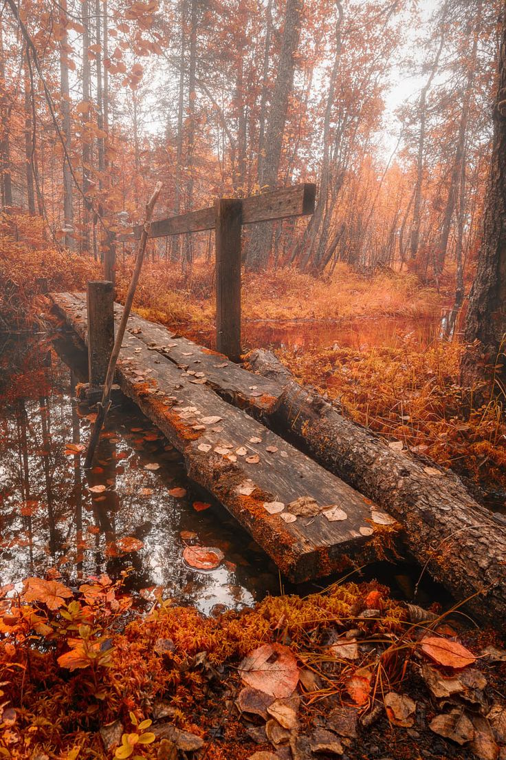 From the book where you might see the beautiful autumn leaves -  Autumn Bridge By Tuomo Arovainio