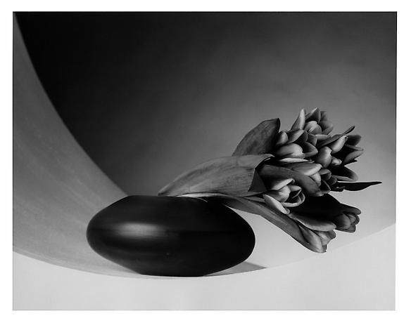 "Tulips, 1987.  Artist: Robert Mapplethorpe, 1946 – 1989 Gelatin silver photograph  Impression: 6/10  Of Malthorpe's childhood he said, ""I come from suburban America. It was a very safe environment and it was a good place to come from in that it was a good place to leave."""