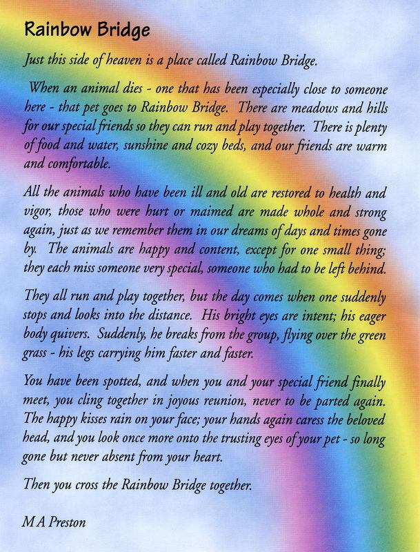 Full Sizes Rainbow Bridges Poems | CRR Rainbow Bridge - Cat Ranch Rescue