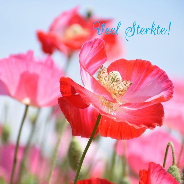 Bijzonder kleurrijke en lieve bloemenkaart van klaproos, mooi en stijlvol, fijn om te ontvangen en krijgen.
