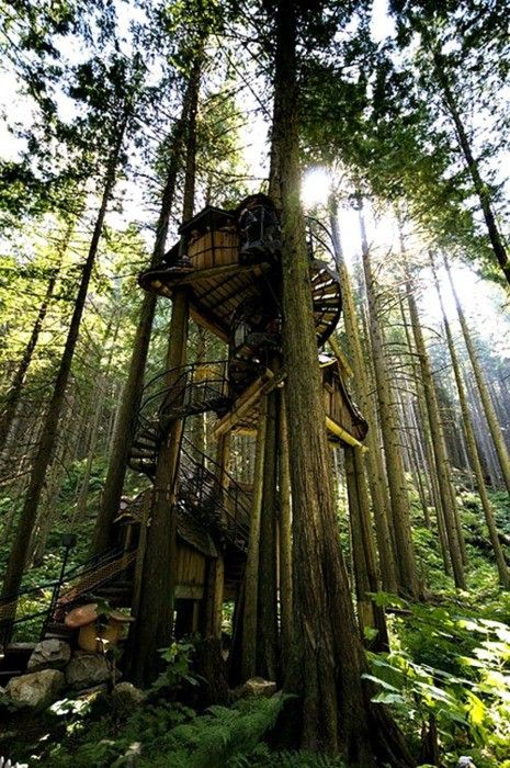 Spirals Staircases, Swiss Families Robinson, Awesome, Tree Houses, Dreams House, Treehouse, Trees House, Places, British Columbia