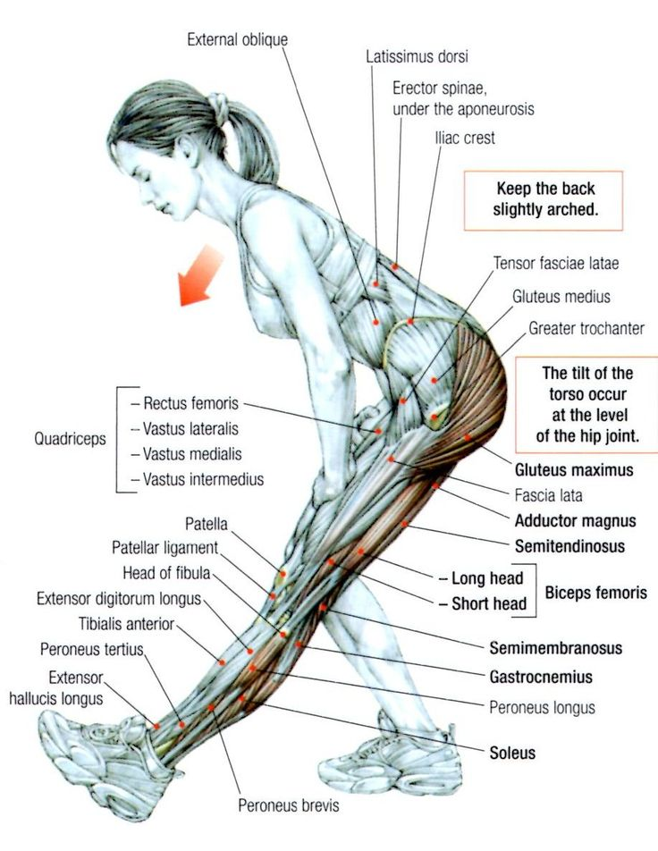 Stretching: How to Stretch the Hamstrings