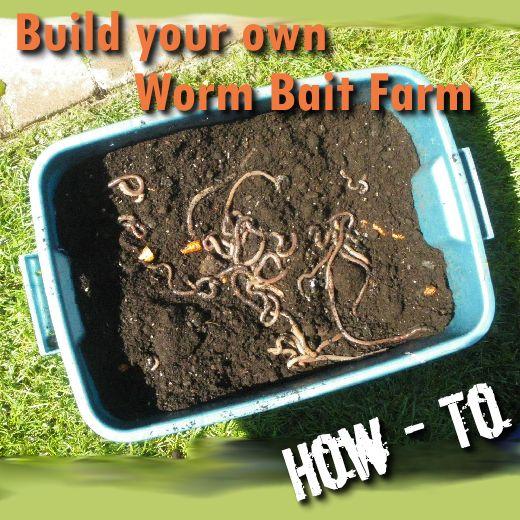 Wie man eine Regenwurmfarm beginnt und führt. Nicht nur als Köder, sondern für Gärtner.