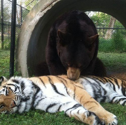 Die Drei werden liebevoll BLT genannt. Sie essen, schlafen und spielen zusammen.