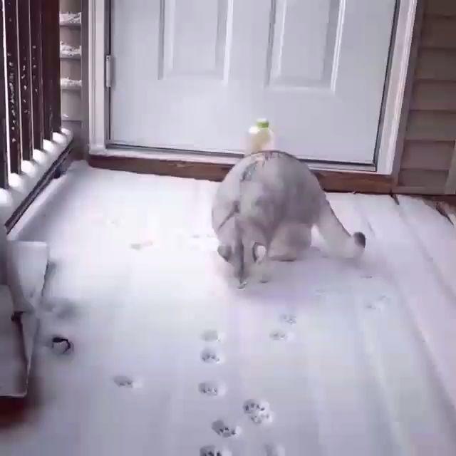 Snow paw prints – Cool Cat Tree House