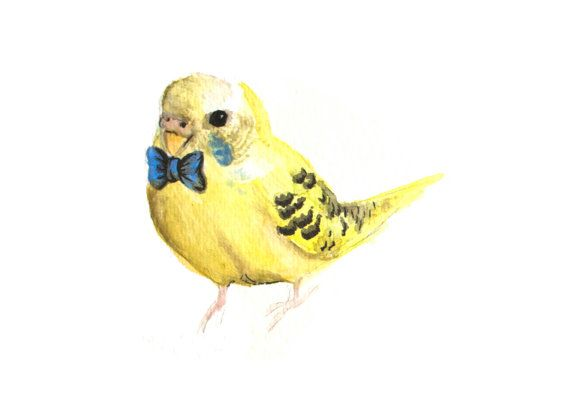 Dapper Yellow Parakeet with Blue Bow Tie - Watercolor and Pen and Ink Art Print Parrot Budgie British Bird Illustration Sunny Navy