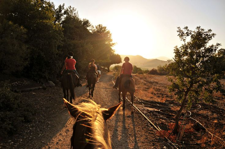 Horseback Riding in Israel #horses Sea of Galilee #travel #sunset @Israel Tourism