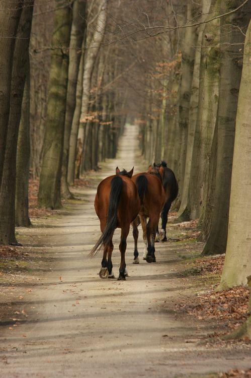 Wild horses by hansvdaa