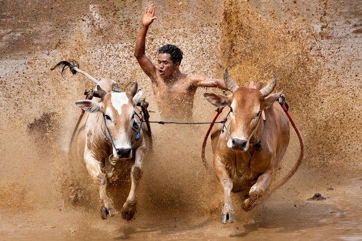 The Raging Bull by Muhammad Fadli