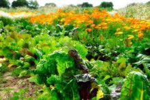 """Bei """"Meine Ernte"""" kann man sich einen Nutzgarten pachten. So wundervoll toll!  http://www.meine-ernte.de/standorte.html"""