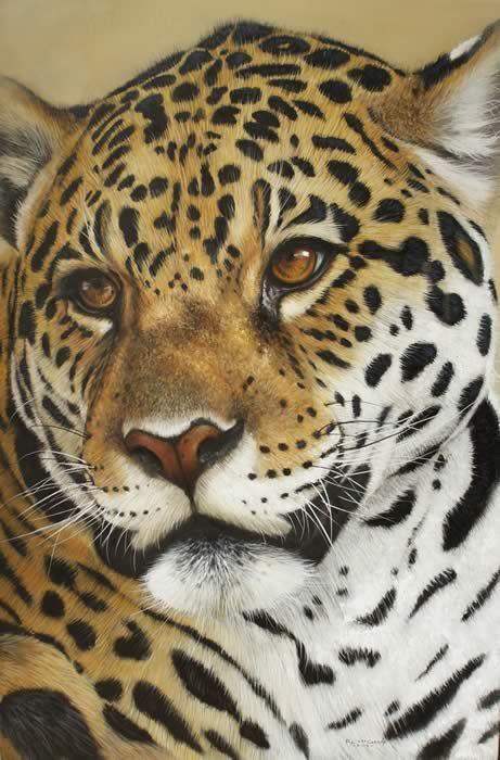 Gallery of Special Offer Paintings by Pip McGarry - International Wildlife Artist painting big cats and other wildlife art