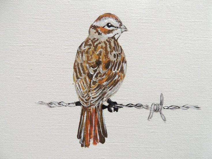 """""""Sparrow on a wire"""""""