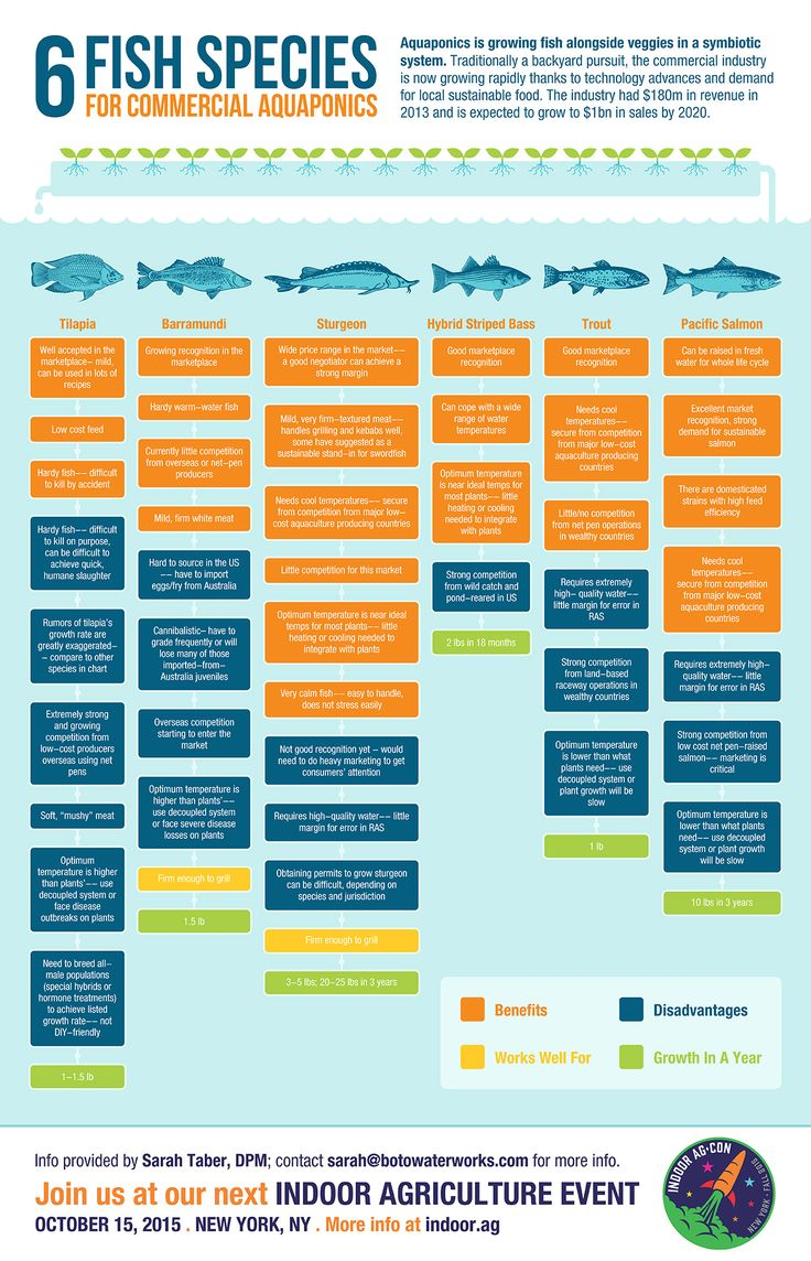 Infographic: Six Fish Species for Commercial Aquaponics                                                                                                                                                                                 More