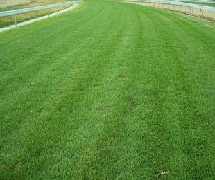 Looking for an economical, dense and beautiful grass for your lawn? Kikuyu turf is your affordable, lush and perfectly green lawn solution. Call Sydney Lawn & Turf Supplies now at 1800 458 859 to get a quote.