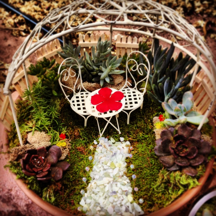 Fairy Garden Furniture And Succulents From Star Nursery And Moss From Hobby Lobby Gardening