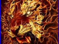 Tiger Fire Wallpaper 4221 HD