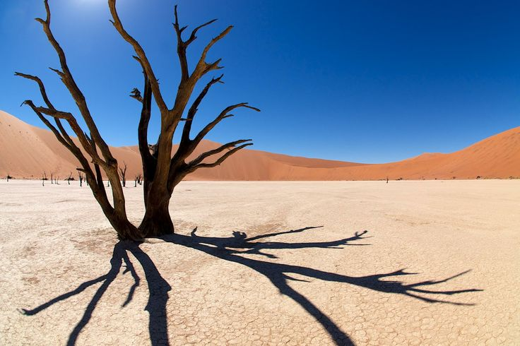 Namib desert III - Deadvlei par Marko Erman