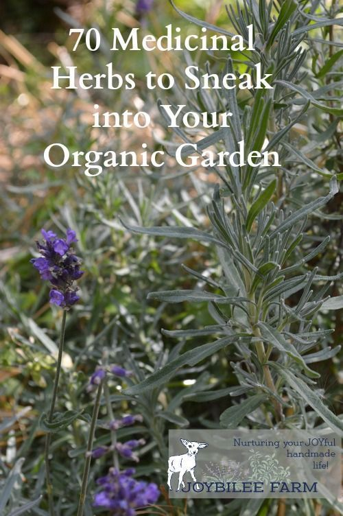 cool 70 Medicinal Herbs to Sneak into Your Organic Garden | Joybilee Farm