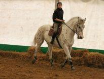 Ogłoszenie :: Profesjonalny trening kona i jeźdźca, licencjonowany szkoleniowiec PZJ :: Ogłoszenia re-volta.pl