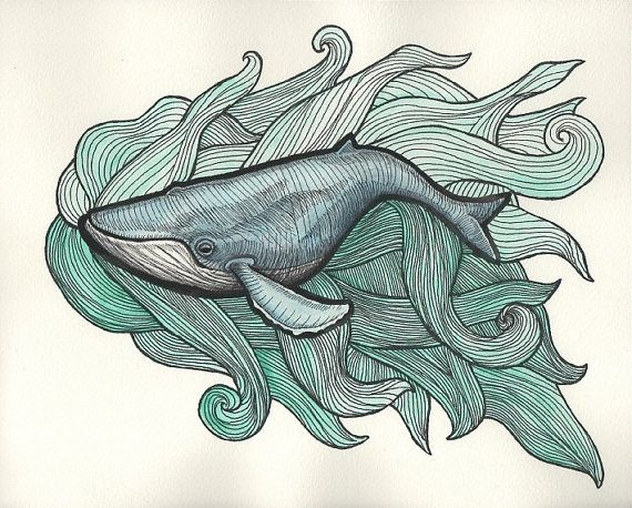Magnífico dibujo de ballena