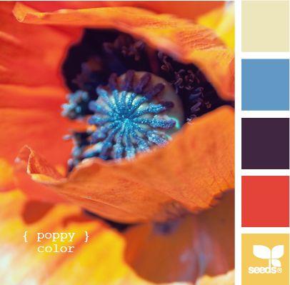 poppy colorColors Pallettes, Poppies Colours, Design Seeds, Poppies Colors, Living Room, Colors Palettes, Colors Schemes, Colors Painting, Poppies Blue