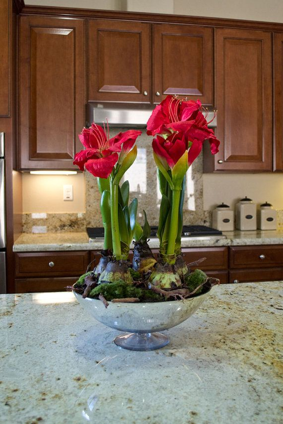 Artificial amaryllis plant on a chrome vase floral for Planter des amaryllis