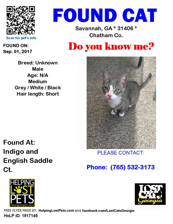 Do you know this Cat? #Savannah (Indigo & English Saddle Ct.)  #GA 31406 #Chatham Co.  #Cat 09-01-2017! Male #Unknown Grey / White / Black/His coat is silver grey with dark grey/black stripes. He has a white patch in his belly and chest area which extends to a white vertical stripe between his eyes. He has green eyes. He is very friendly and approaches humans easily.  CONTACT Phone: (765) 532-3173  More Info Photos and to Contact: http://ift.tt/2f0xj4j  To see this pets location on the…
