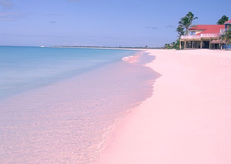 Pink Sands Beach, The Bahamas.  Harbour Island is where you will find the Bahamas' most famous pink beach which stretches three miles along the eastern coast. Pinks Sands Beach is protected by a coral reef and its sand is a composition of tiny microscopic animals known as Foraminifera, which grow bright red shells that wash ashore and mix with the white sand to create a pink hue.