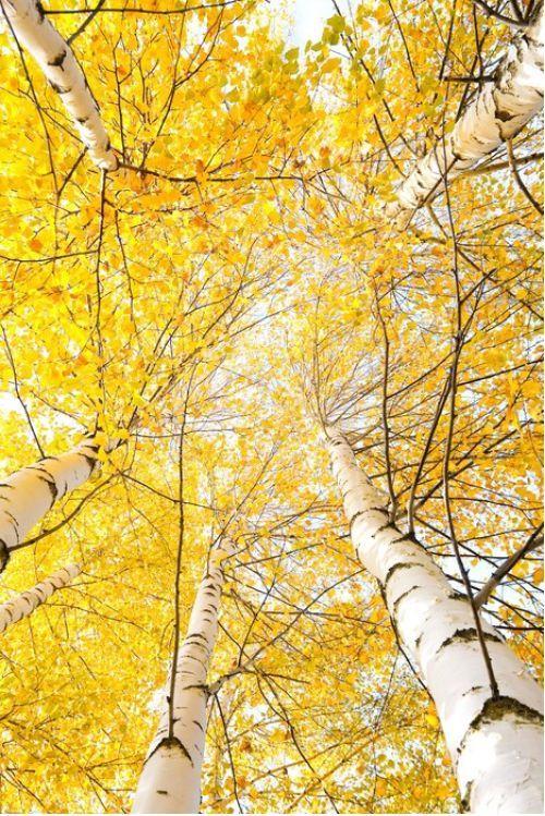 Amazing Trees from $34.99 | www.wallartprints.com.au #TreePictures #NaturePhotography