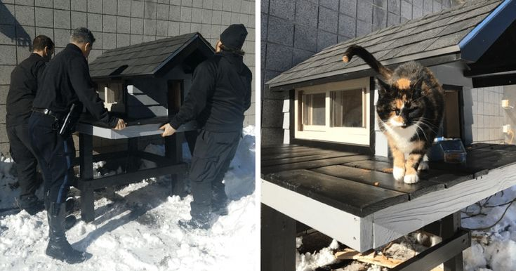 This Cat Kept Coming To A Police Department, So The Cops Built Their New Master A Cozy Condo
