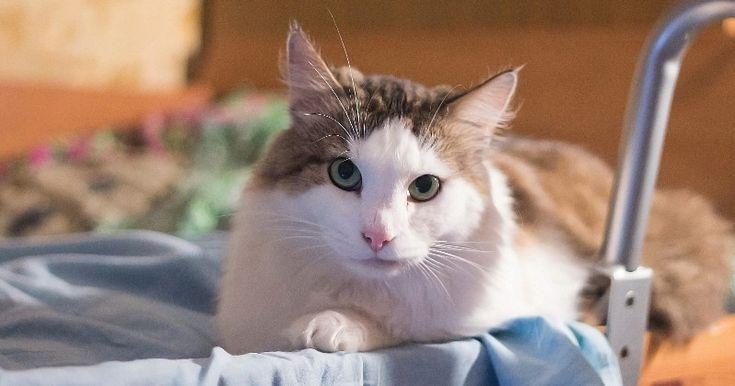 Un chat sauve sa famille d'une intoxication au monoxyde de carbone !