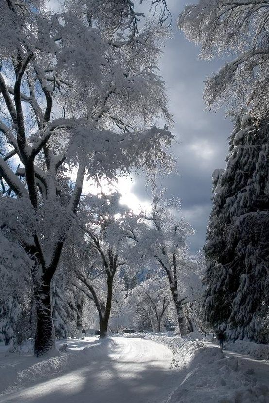Beautiful winter picture...We got snow this morning, not as much as this but still lovely