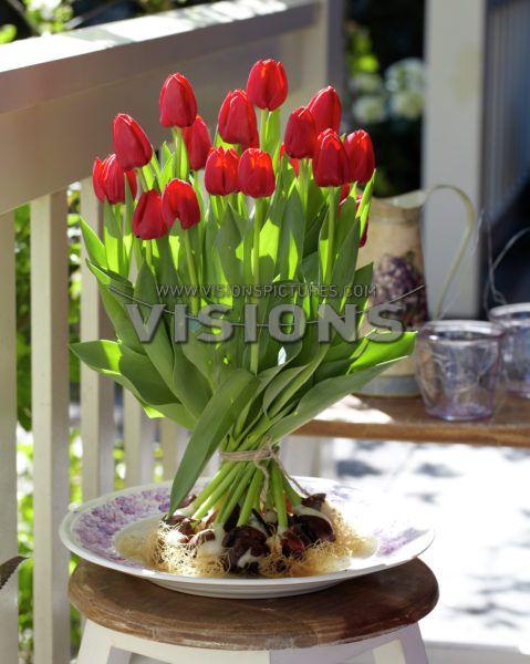 Tulp boeket // Tulip bouquet